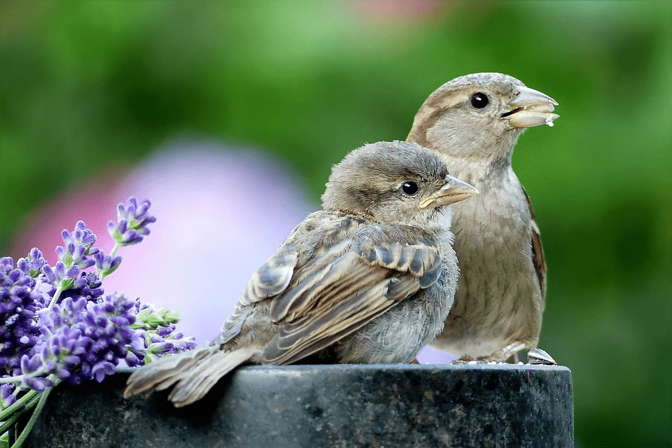 two birds hanging out
