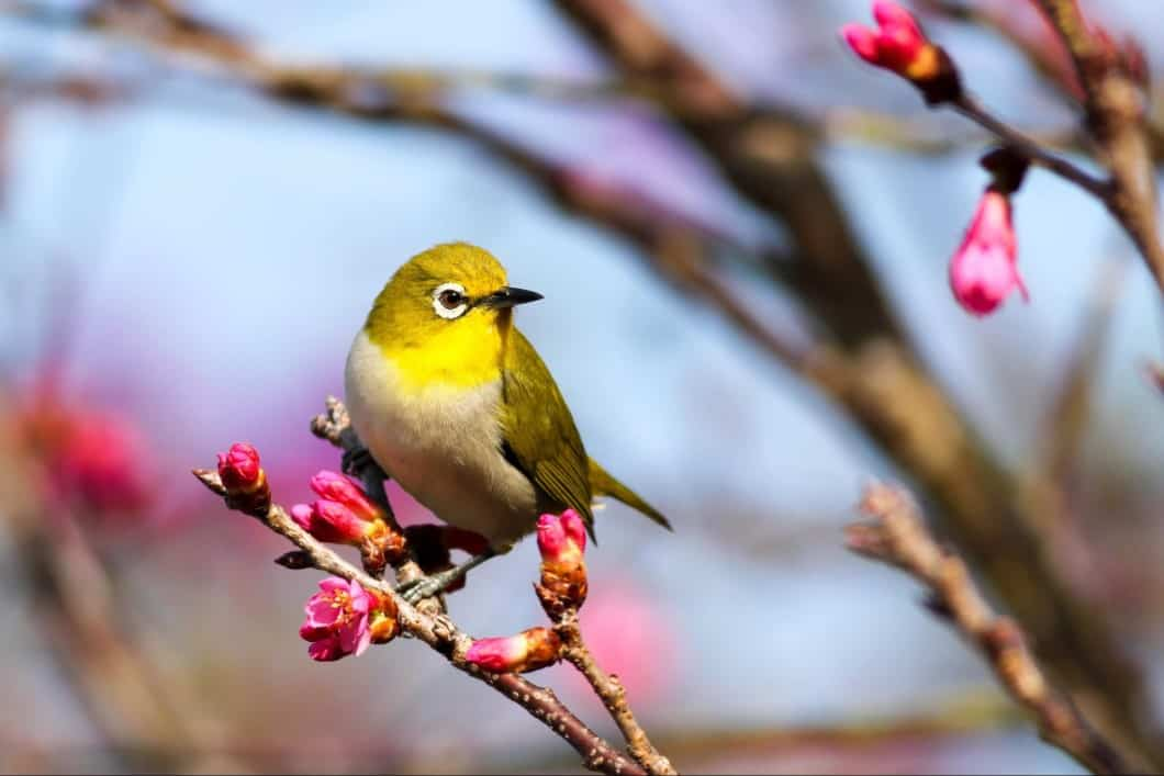 Yellowbird perched on a branch