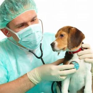 especialidades veterinários