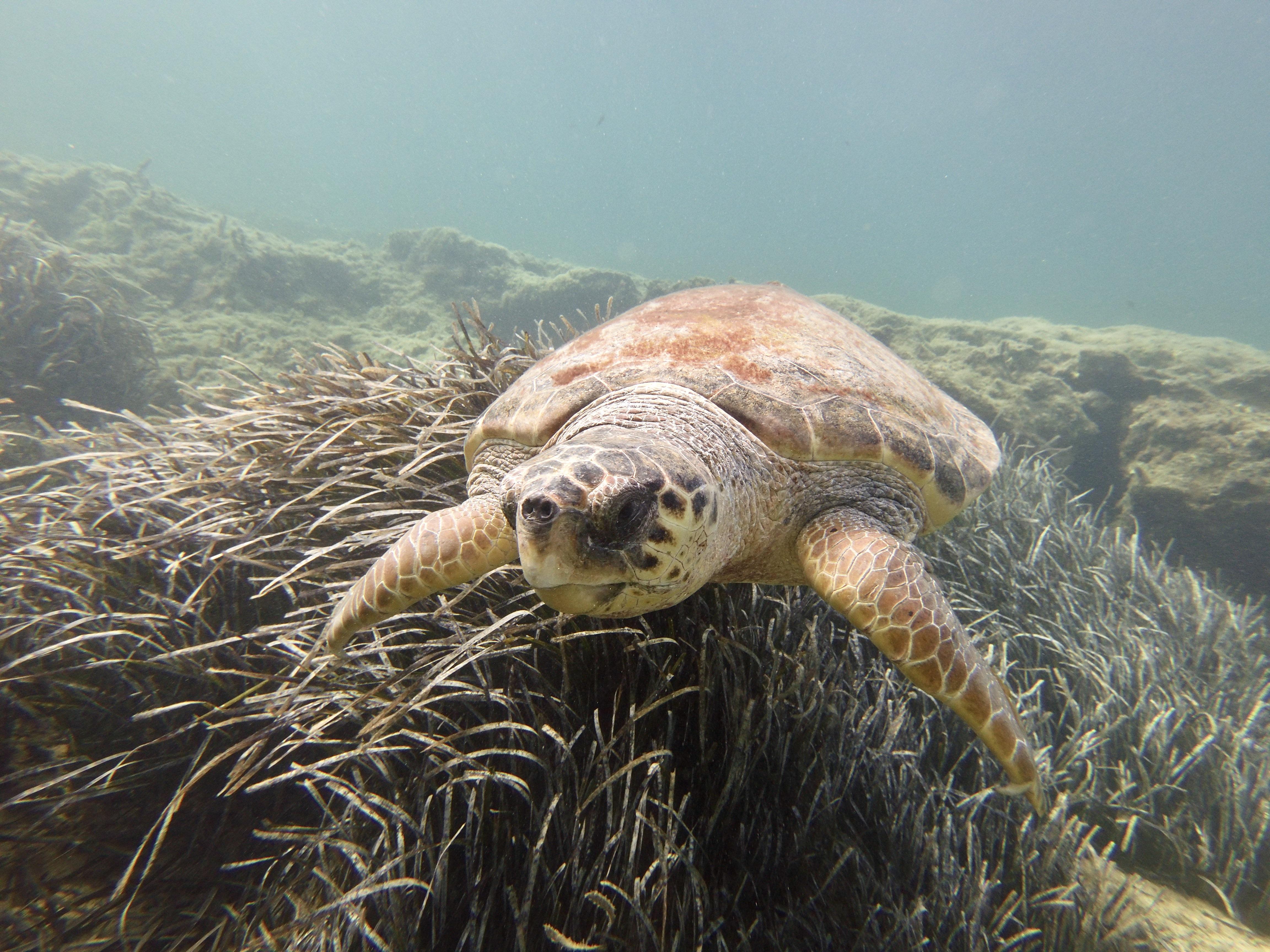 Turtle sight seeing - Kalliopi Dive College