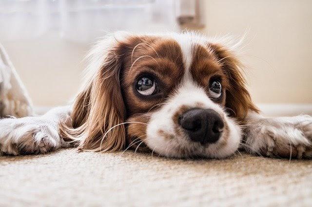 Prohibir mascotas en un piso de alquiler, ¿es legal?