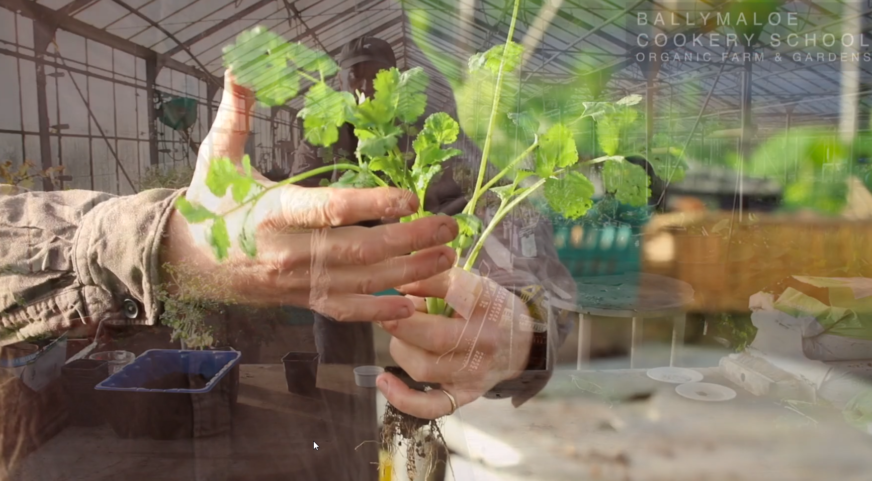 In the Garden : Winter Sowing Herbs