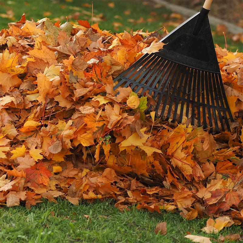 Fall clean up in the Golden Horseshoe, ON