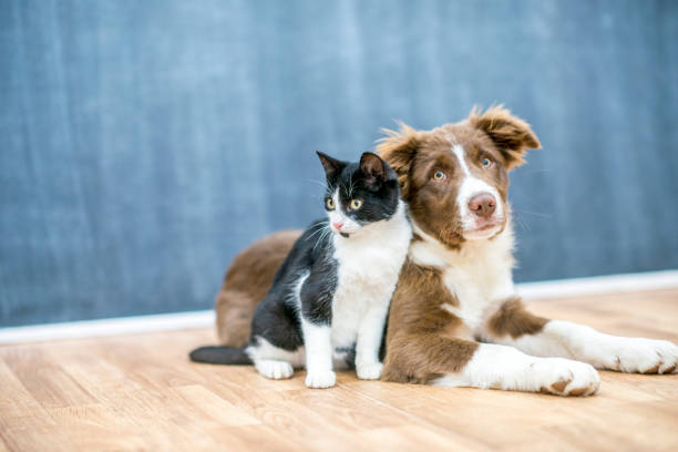 Pet Urine & Pet Odor Removal Baltimore Annapolis Maryland