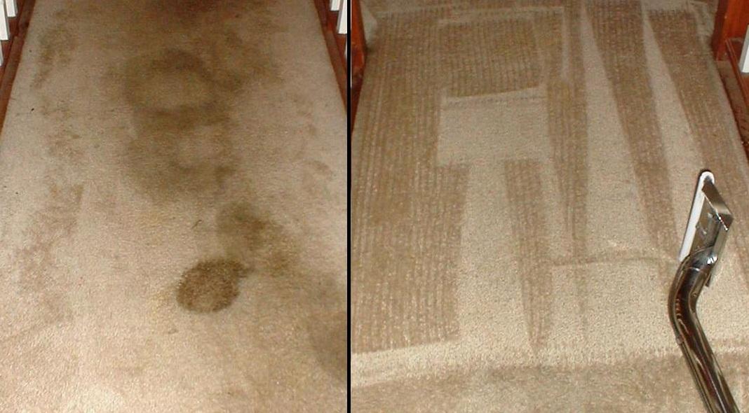 Carpet Cleaning Davidsonville Maryland
