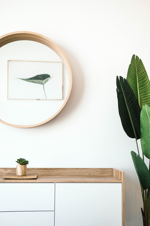 Speil og grønn plante