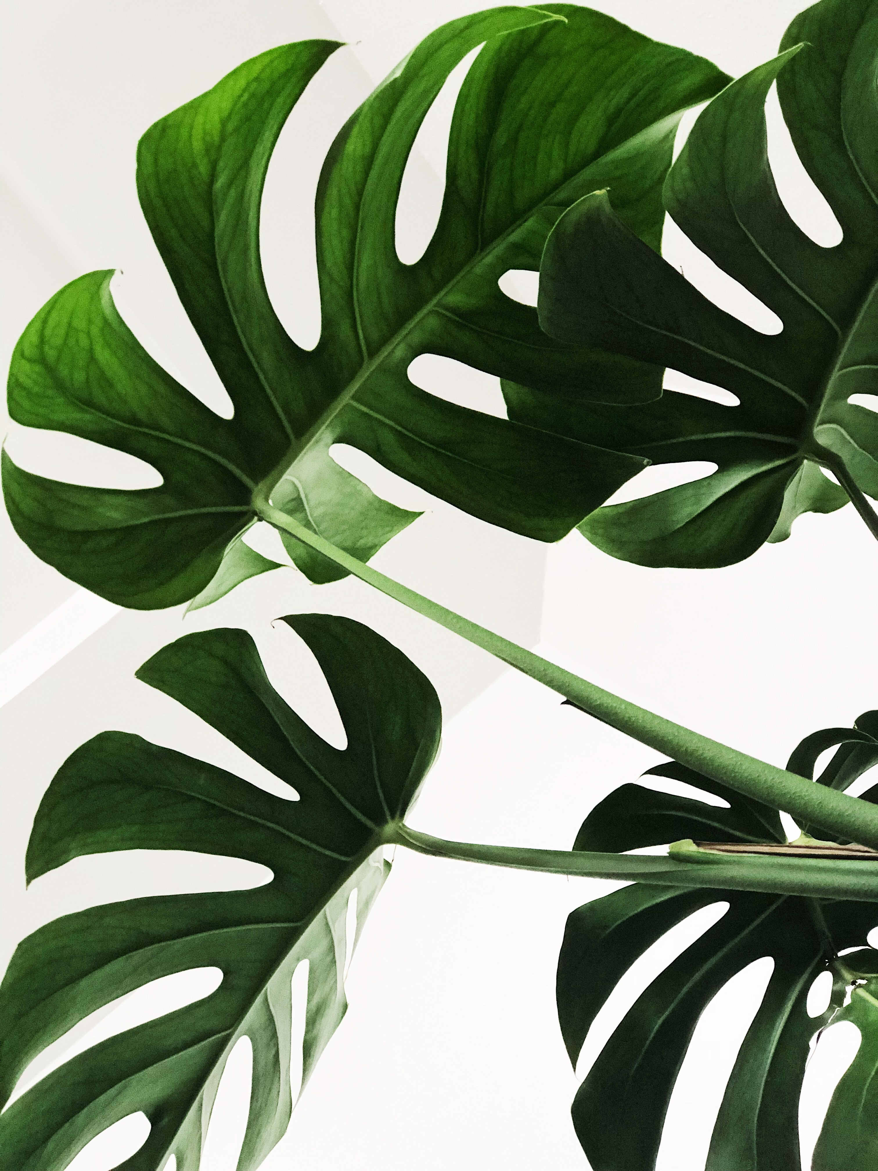 Grønn plante