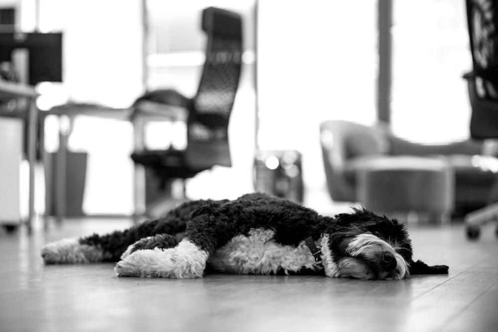 It's a hard life!