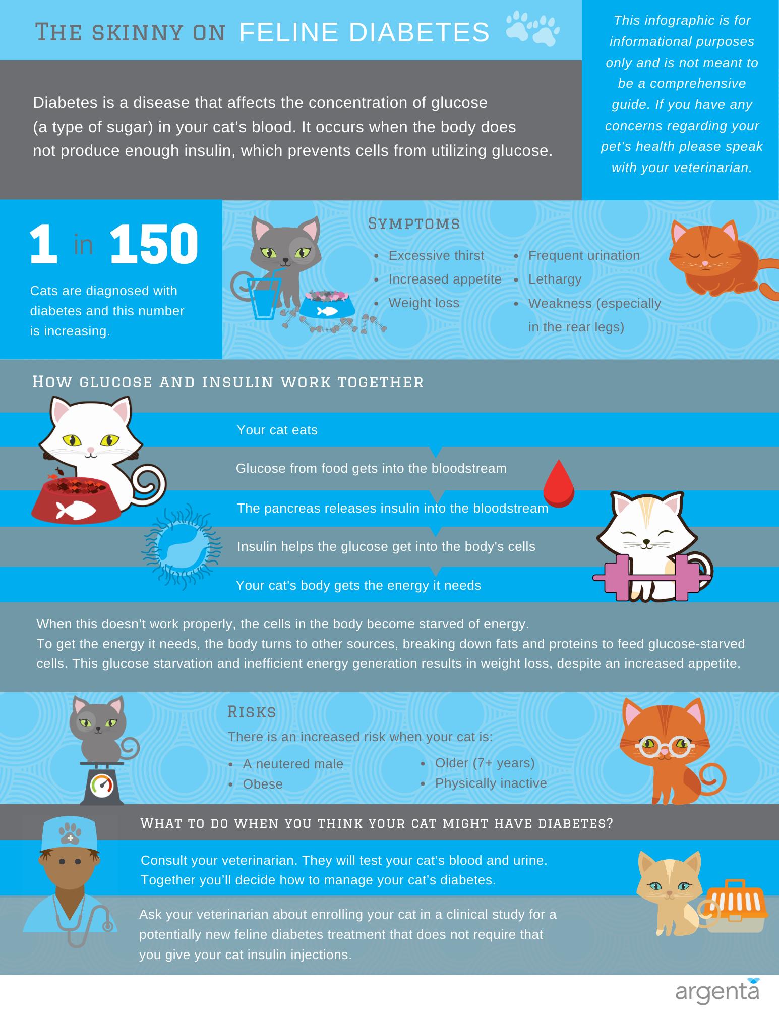 The Skinny on Feline Diabetes