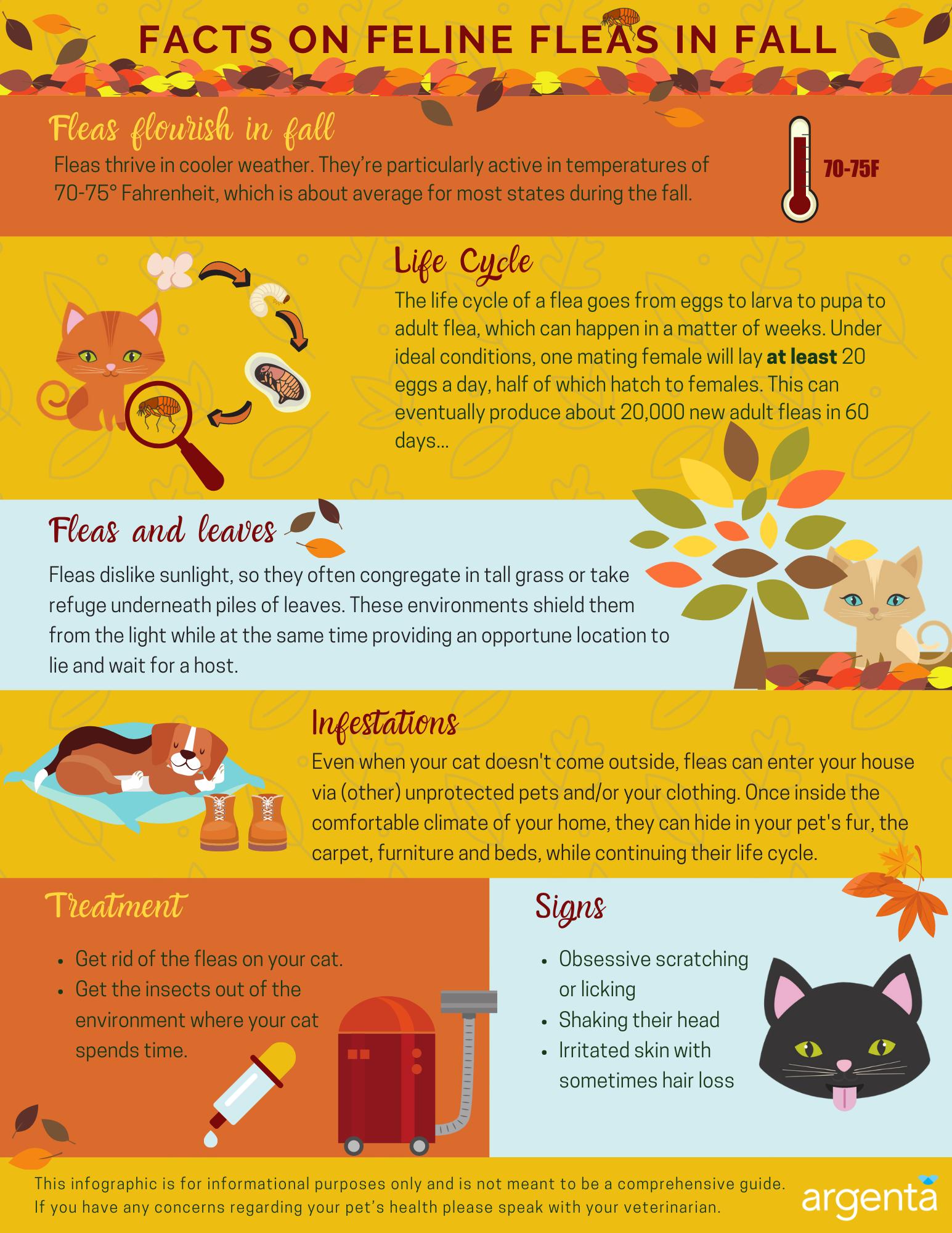 Facts on Feline Fleas in Fall
