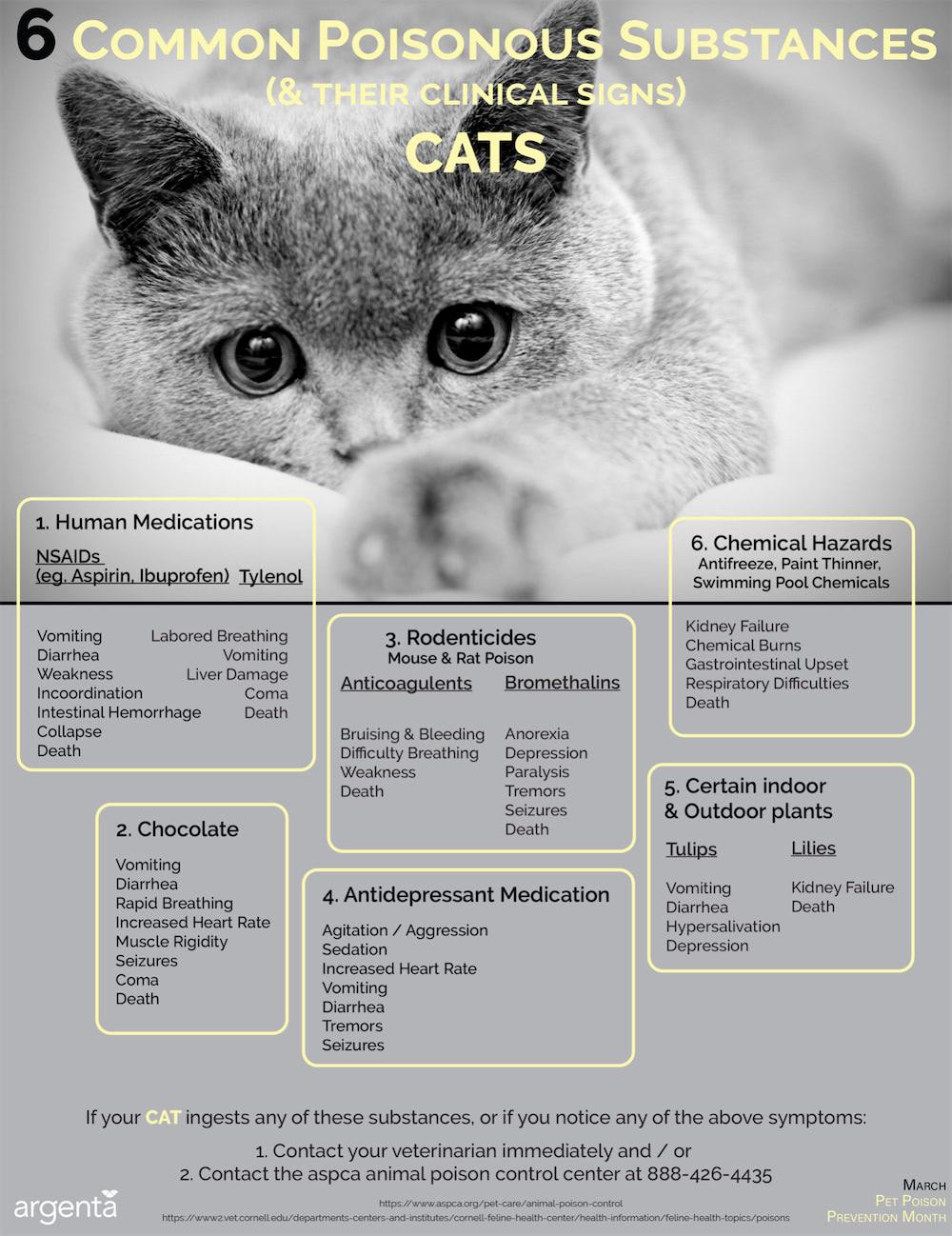 6 Common Poisonous Substances: Cats