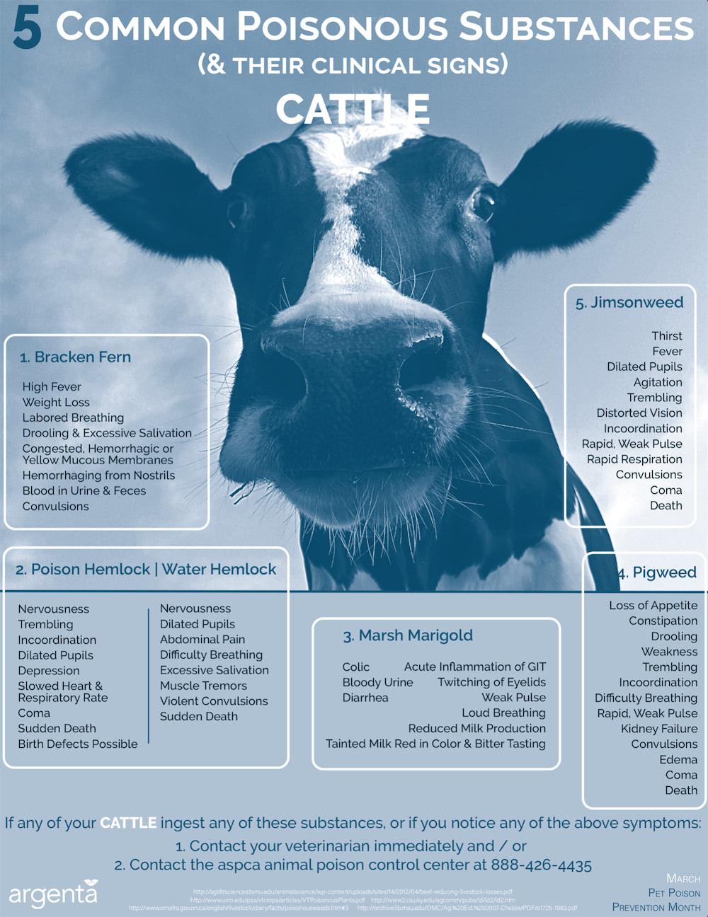 5 Common Poisonous Substances: Cattle