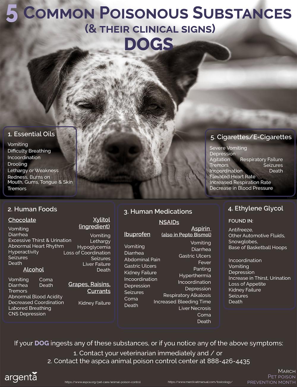 5 Common Poisonous Substances: Dogs