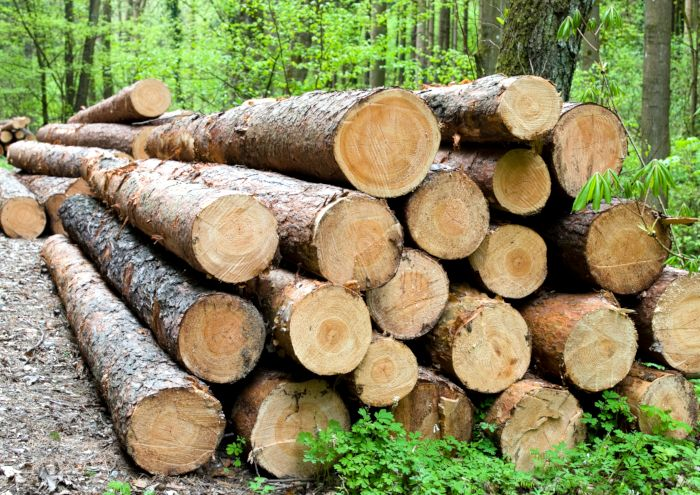 Gefällte Holzstämme