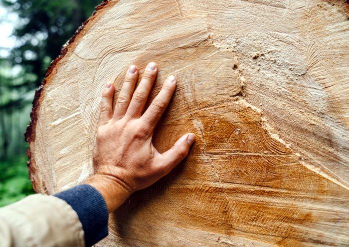 Eine Hand berührt einen gefällten Baum