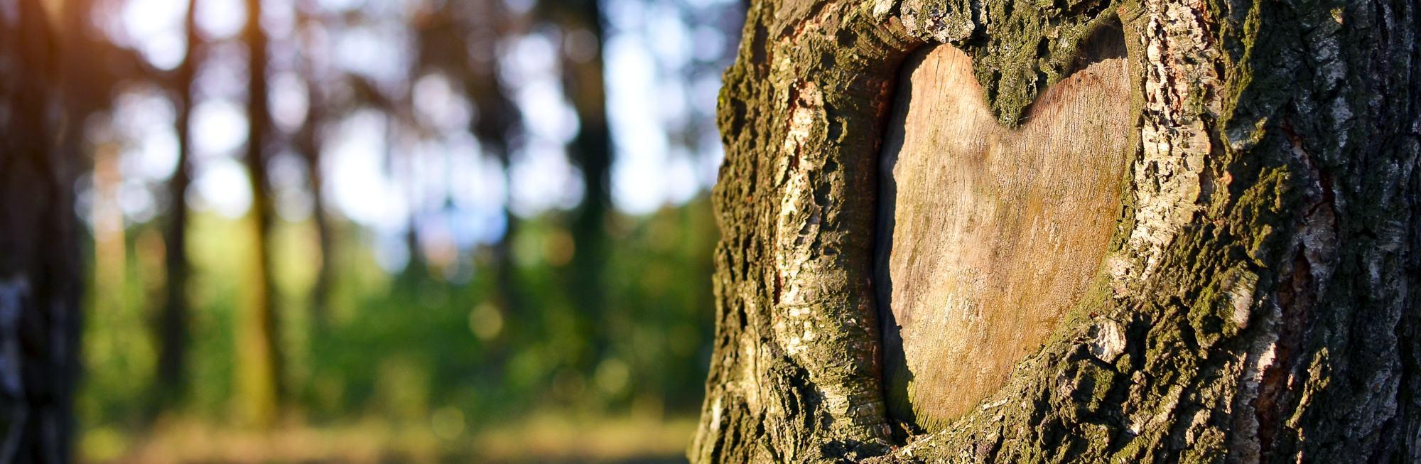 Ein Baum mit herzförmigem Astloch