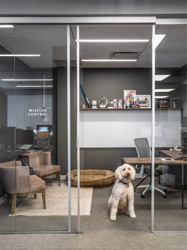 dog in boll and branch office