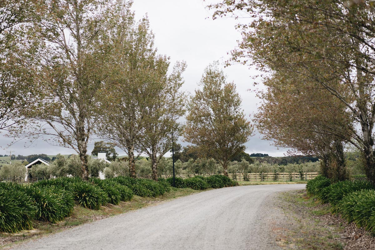 The tree lined road into Brackenridge.