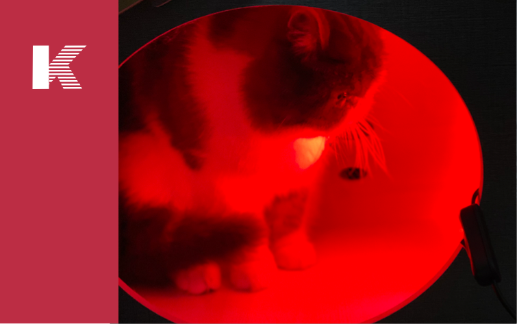 Does Your Cat Get Depression in Winter? Light Therapy Can Solve it
