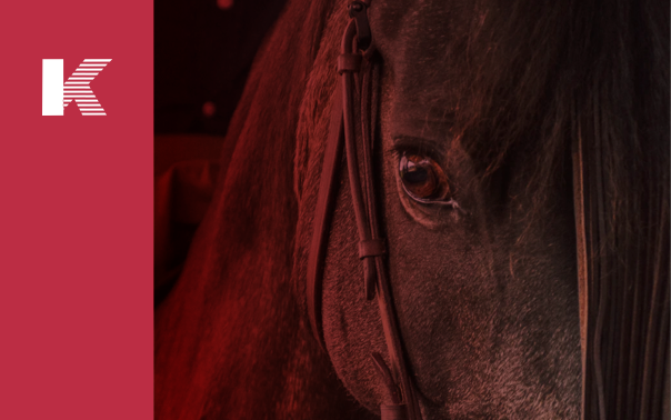Light Therapy — Wound Healing in Horses