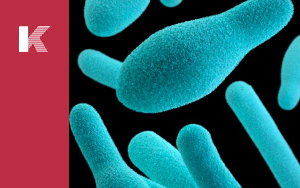 Blue Light Reduces Photosynthetic Efficiency of Cyanobacteria