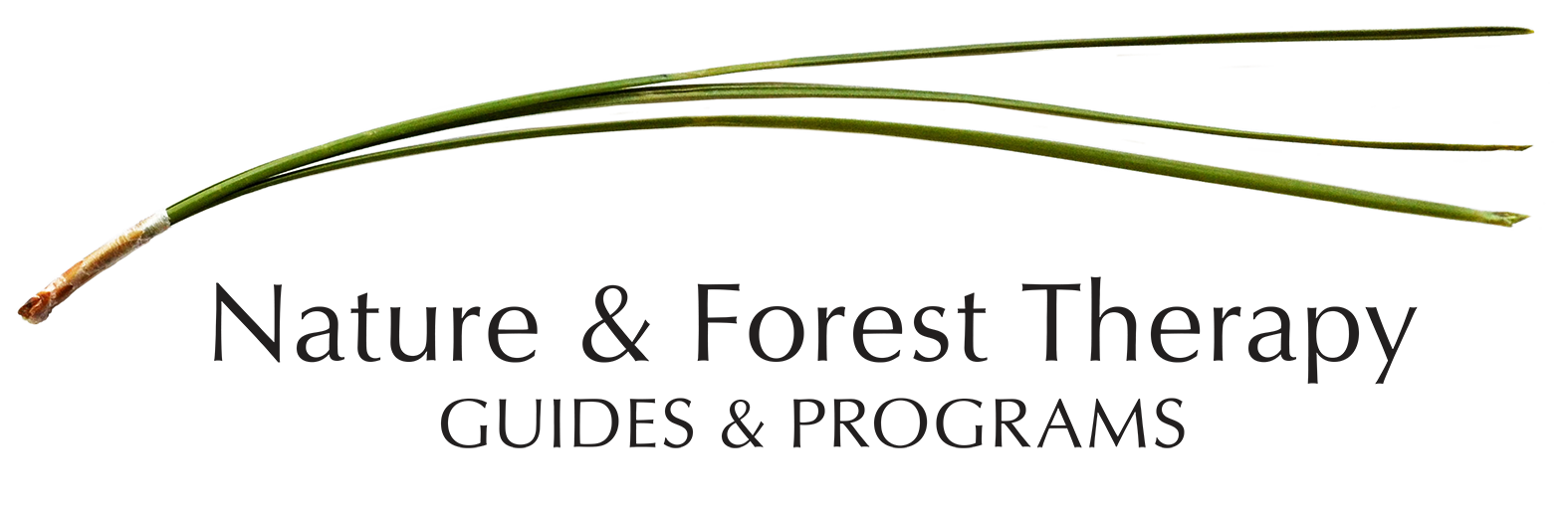 Nature and Forest Therapy Guides