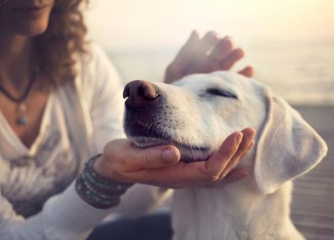 11 way to pamper your pet