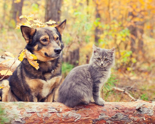 Fall into the Season - Vancouver Fall Dog Care