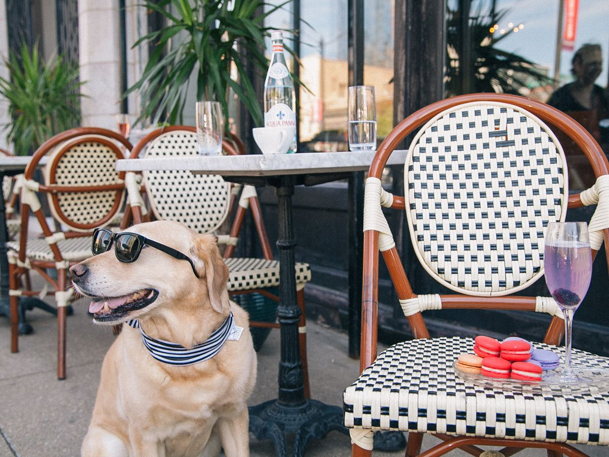 Dog Activities to do in Vancouver