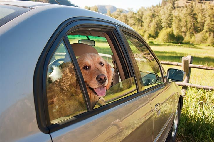 Dog Safety Guide: Summer Kit
