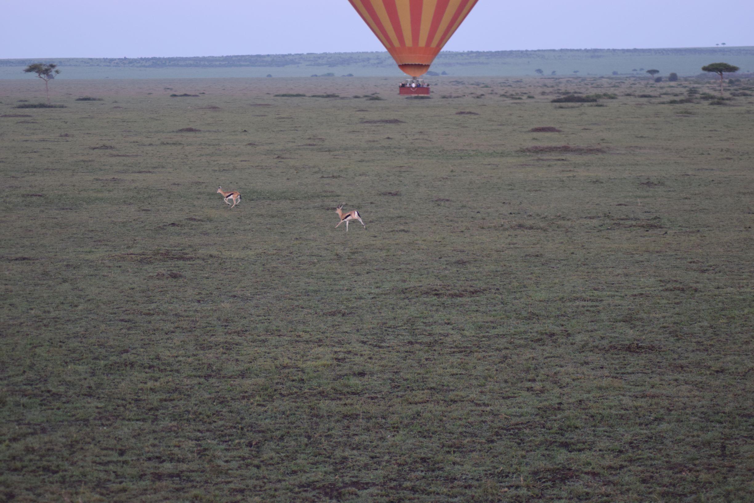 A Hot Air Balloon ride over the Maasai Mara