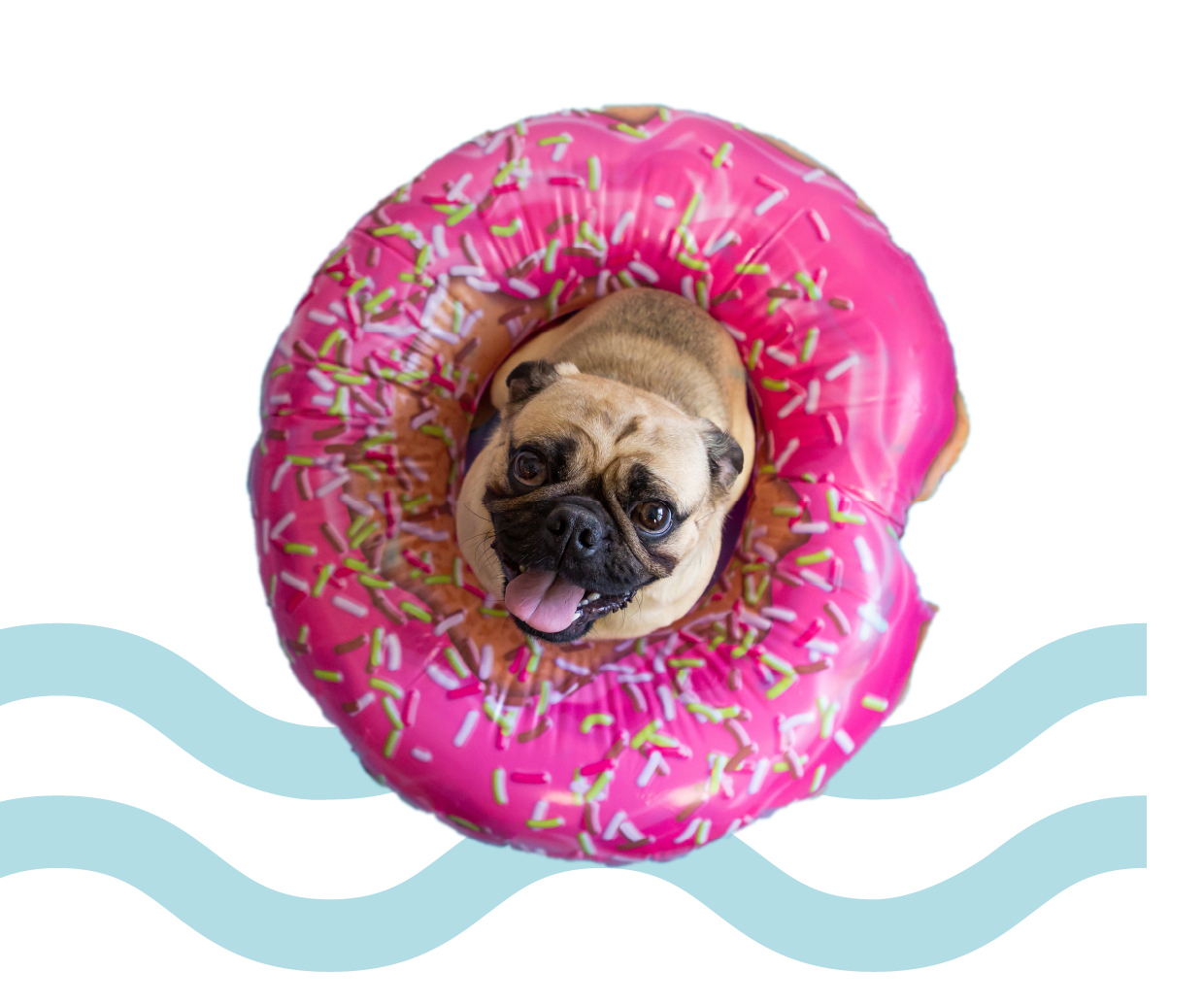 A pug in an inner-tube with Liner World graphics