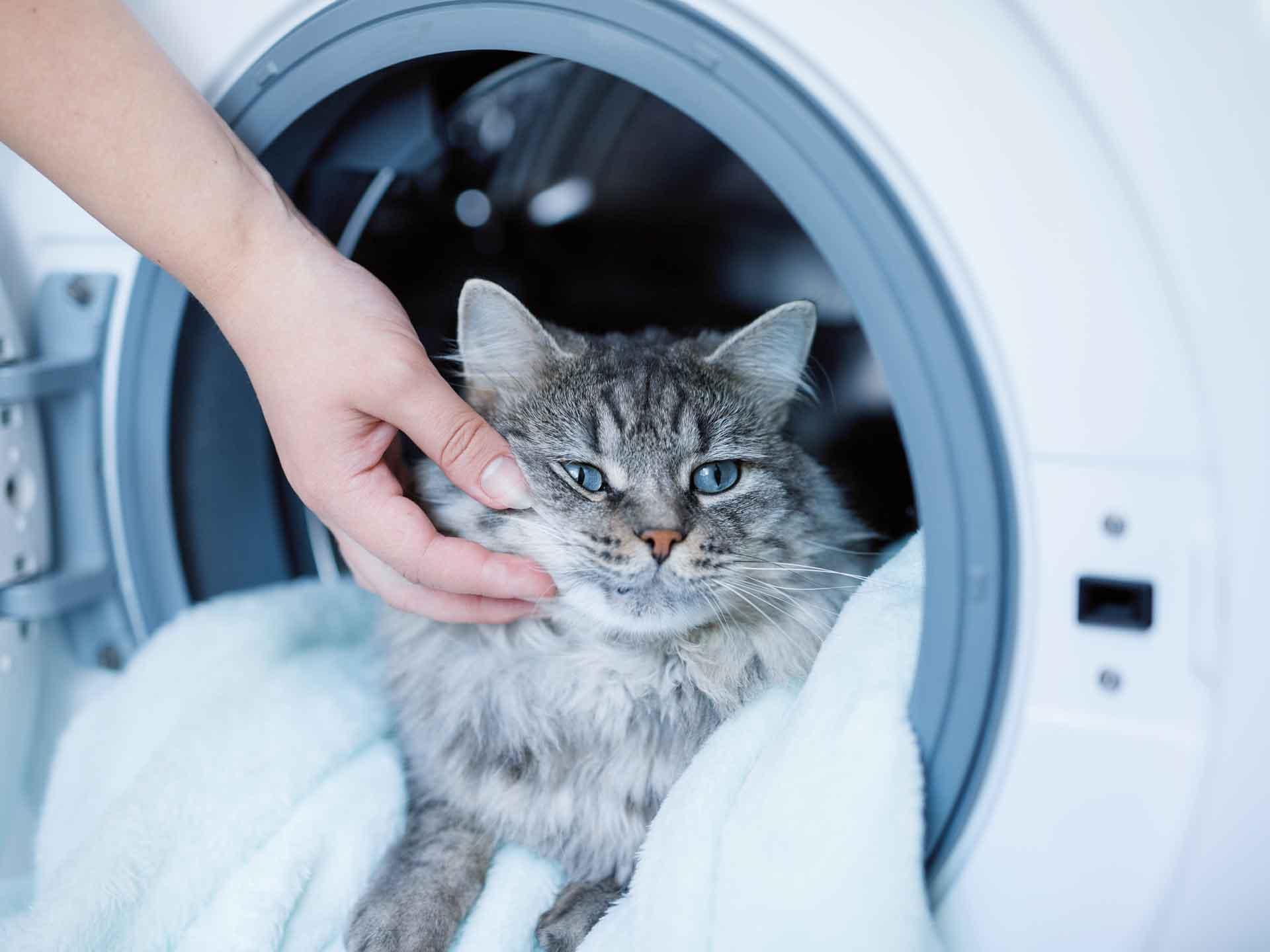 Heizkörperreinigung Conveclean Verfahren Tierhaare entfernen Waschmaschine