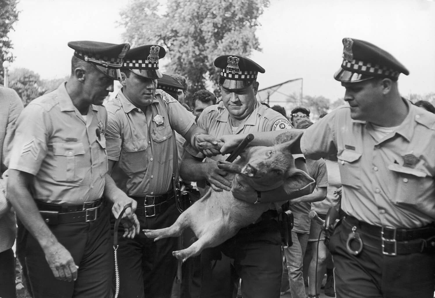 "Pigasus ""Arrested"" by the Chicago Police Department, 1968"