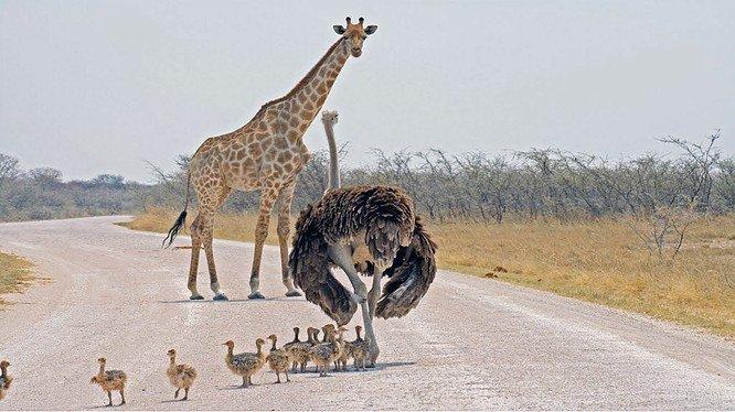 La faune angolaise