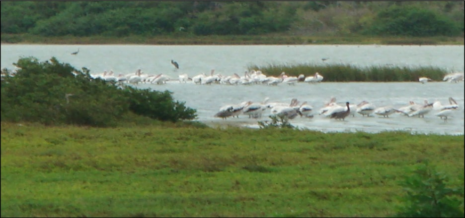 The Sutter Wildlife Refuge in the Oso Bay Estuary