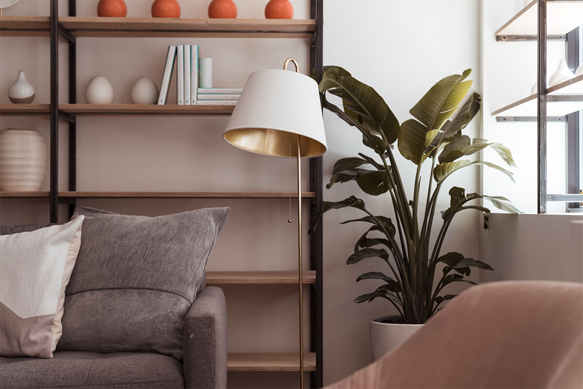 image of indoors space with plants and chairs