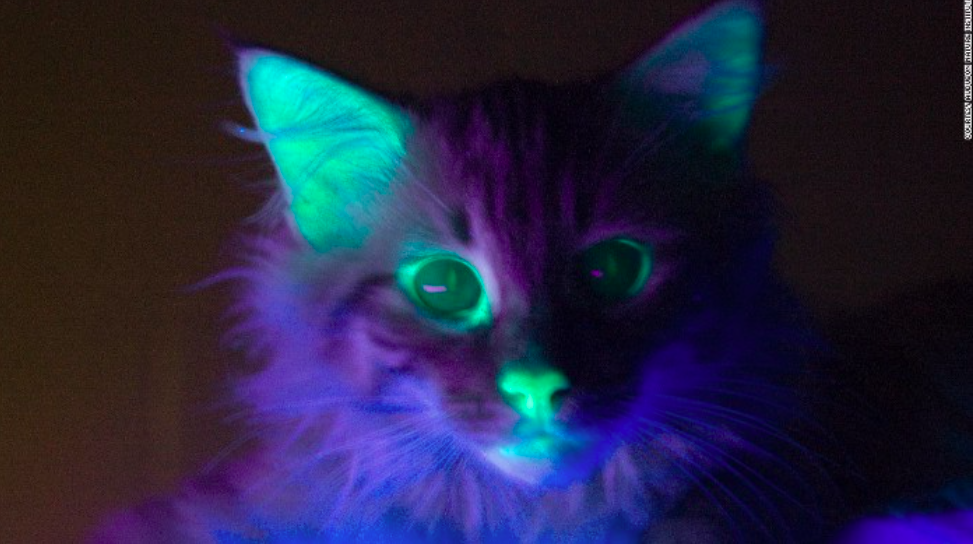 Glowing Cat [Image by Anahid Pahhlawanian] Generating Novel Content without Dataset: Rewriting the rules in GAN: Copy & paste features contextually