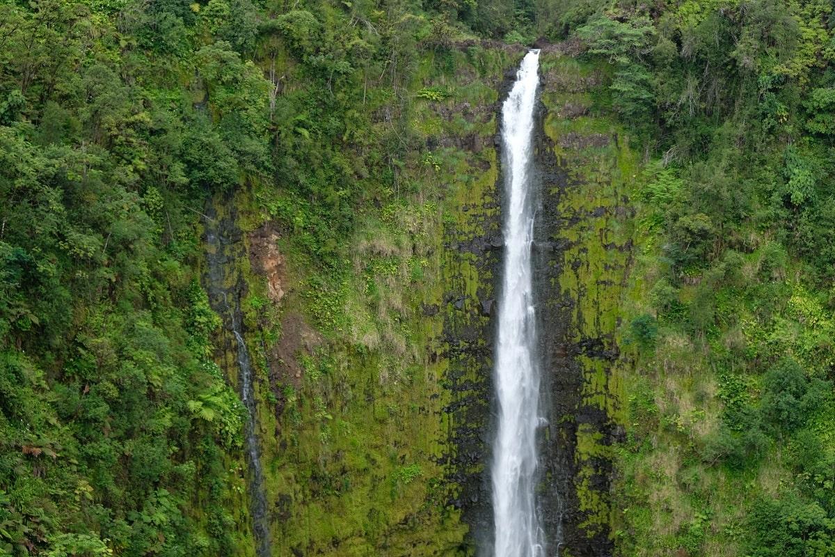Manoa Falls Best Pictures