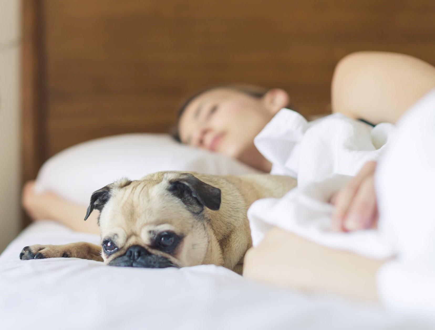 Dietary Tips for Sleep|sleep-and-diet|Dietary Tips for Sleep