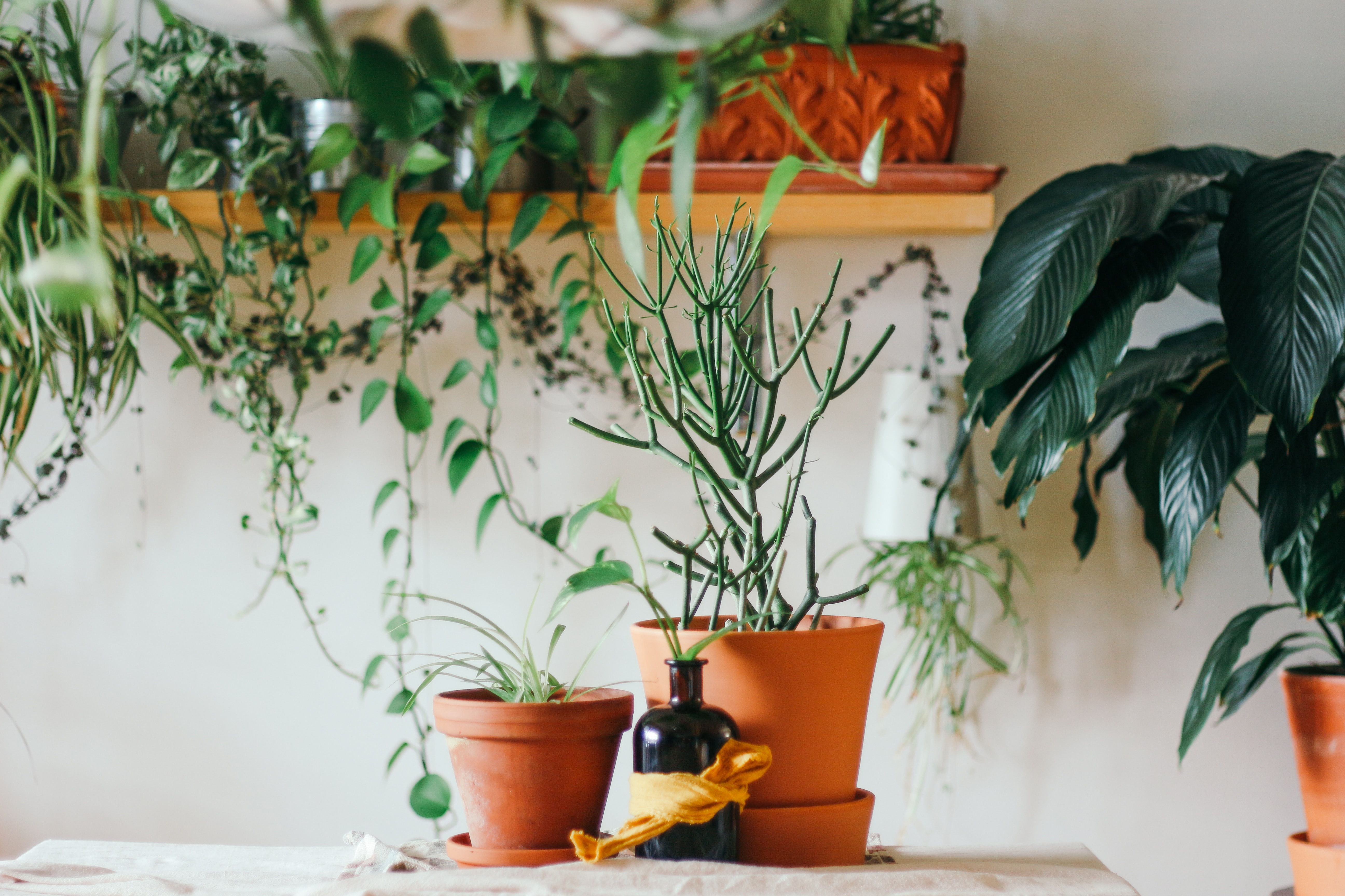 House-Plants|healthy-houseplants