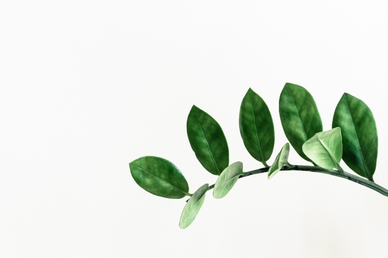 leafs with white background