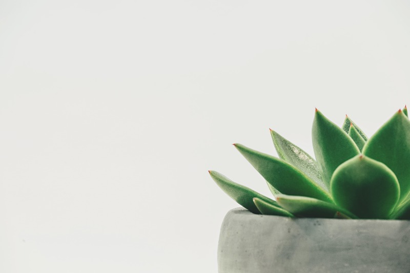close up of small succulent