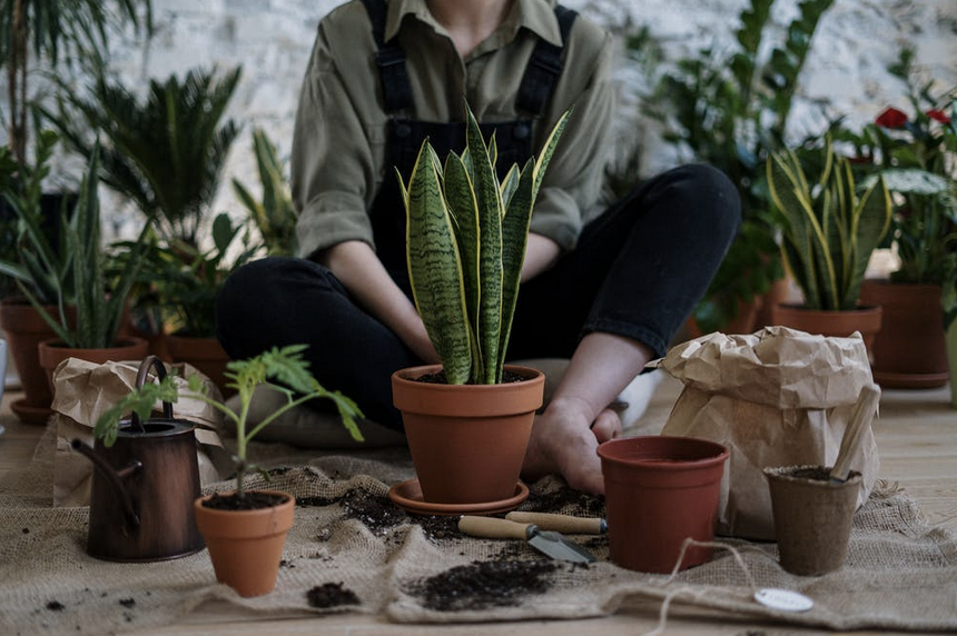 Image of person sitting with multiple pots and plants.