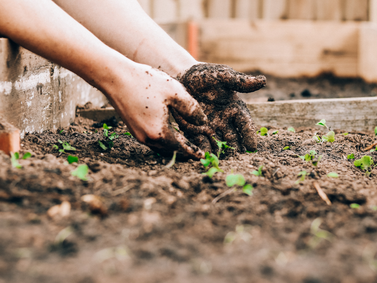 hands digging in a garden