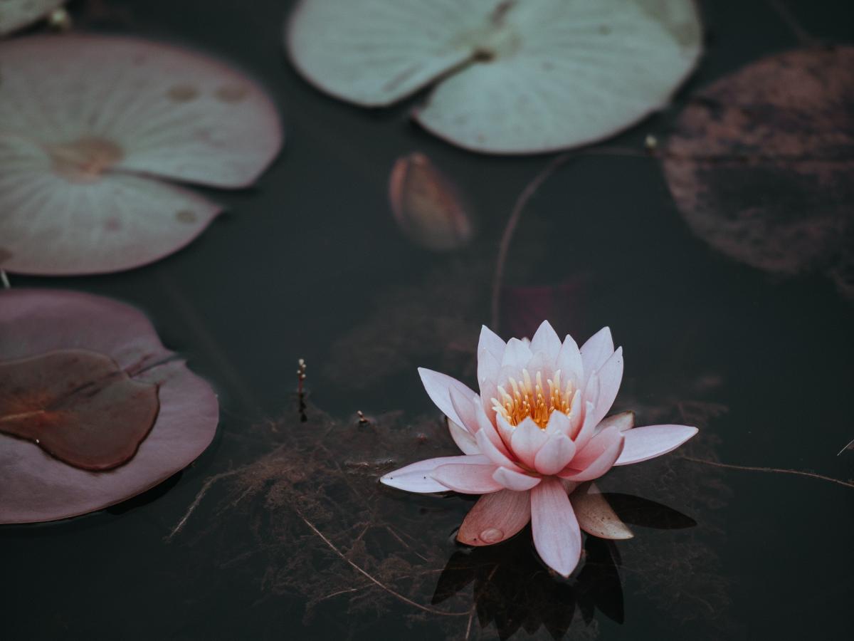 How I Interpret Deepak Chopra's Seven Spiritual Laws
