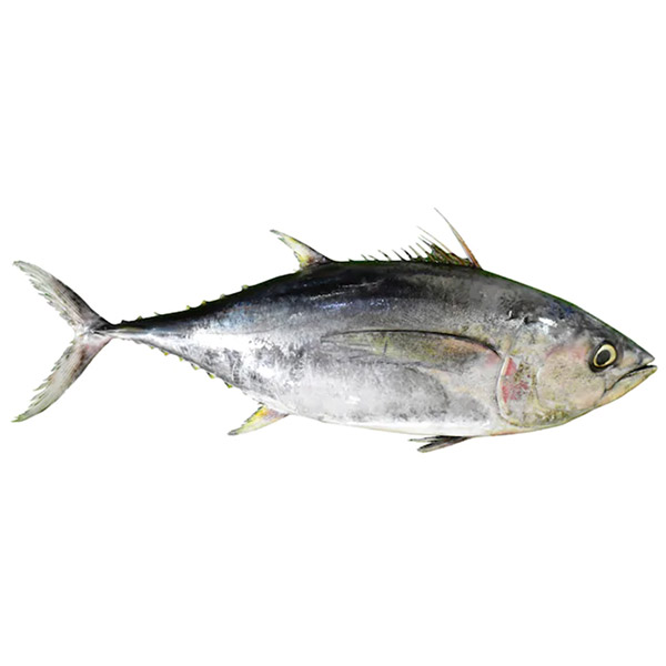 Whole Yellowfin Tuna - Cooking