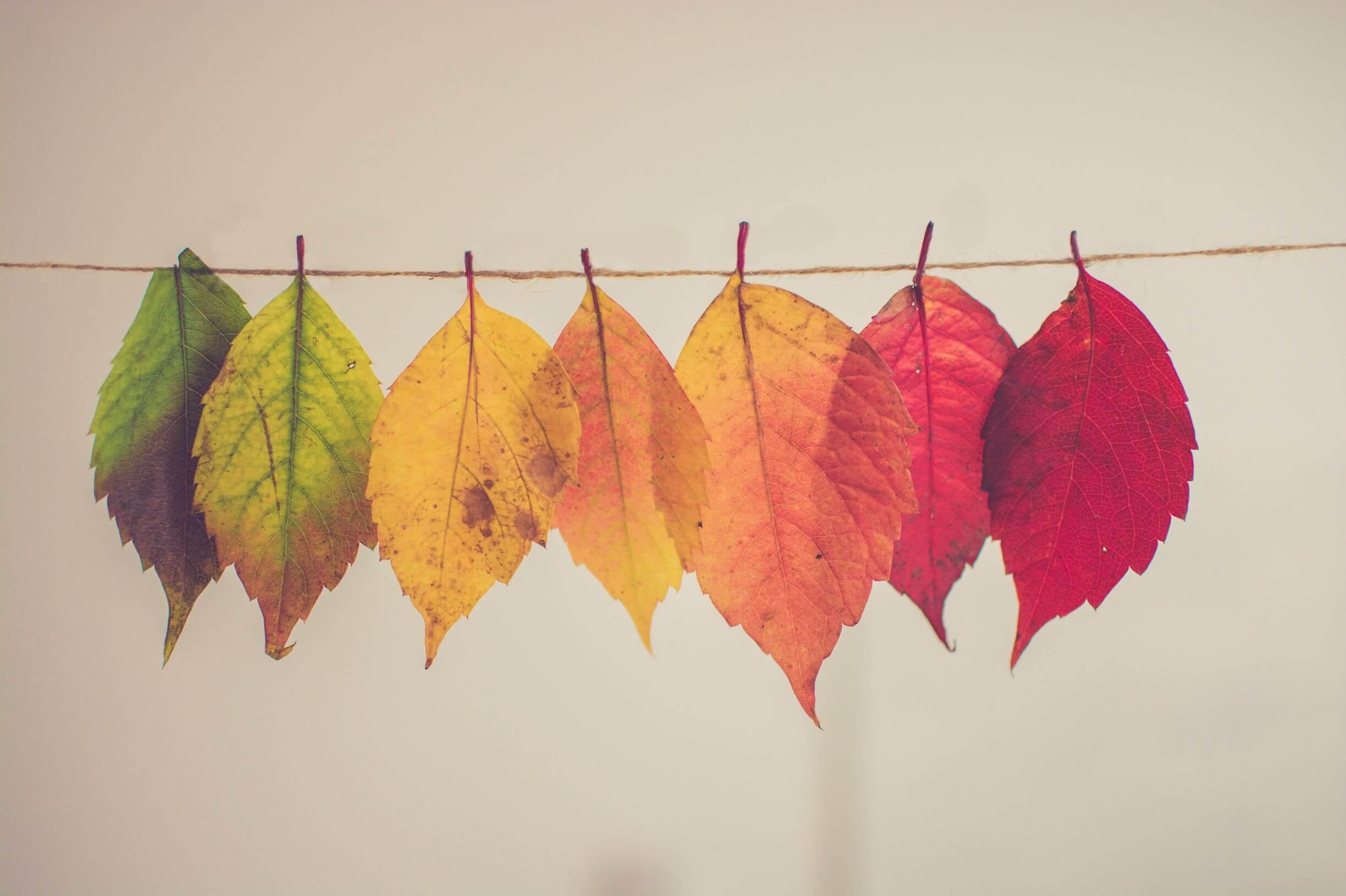 Transformation durch Farbwechsel der Blätter
