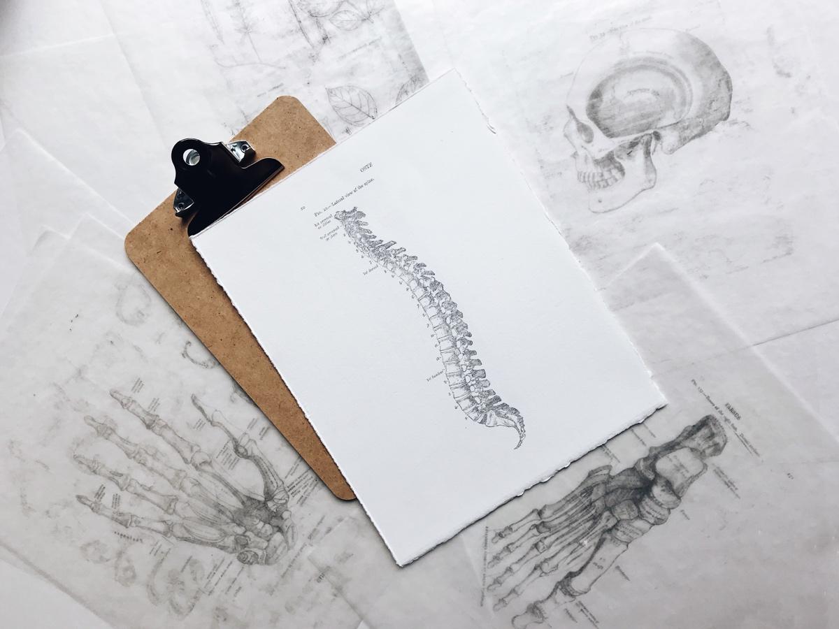 spine-photo
