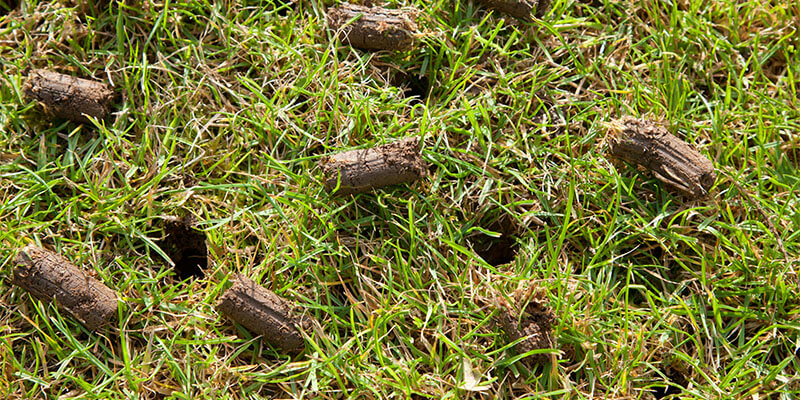 Sign up today for our lawn aeration service!